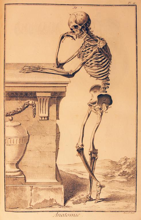 Human skeletal structure